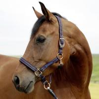 COVALLIERO GoLeyGo HALTER MAX STRENGTH AND SAFETY