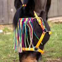RAINBOW BROWBAND WITH FLY FRINGE - 0582